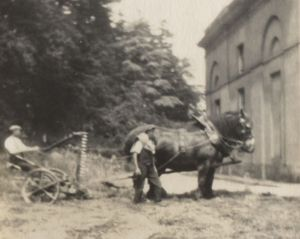 Cutting the grass in the early 1900s at Attingham. This photograph was taken by the side of the Outer Library on the west side of the house.