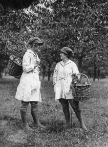 Two ladies from the Women's Land Army fruit picking during WWI.