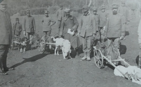 Dogs pulling carts containing supplies, northern Italy, taken between 1915 and 1917.